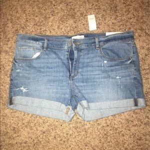 NWT loft shorts